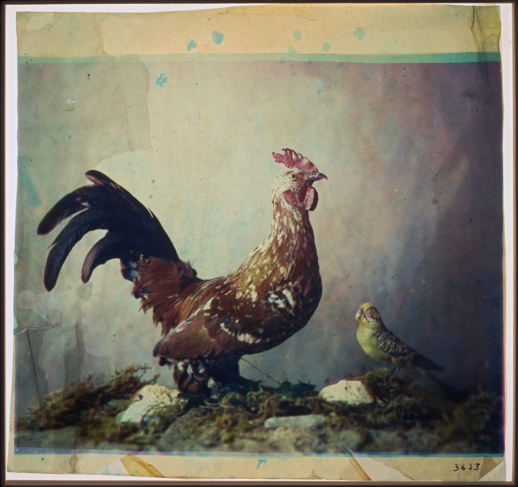 Louis_Ducos_du_Hauron_-_Still_life_with_rooster_-_Google_Art_Project