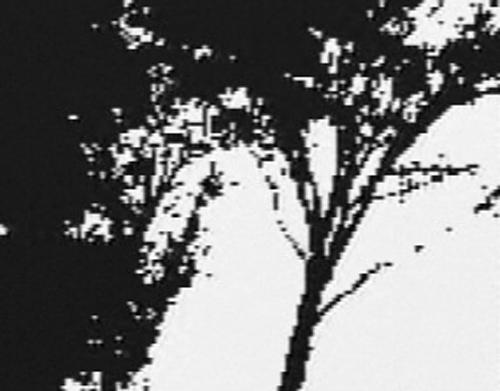 vince-gameboy-camera-61108
